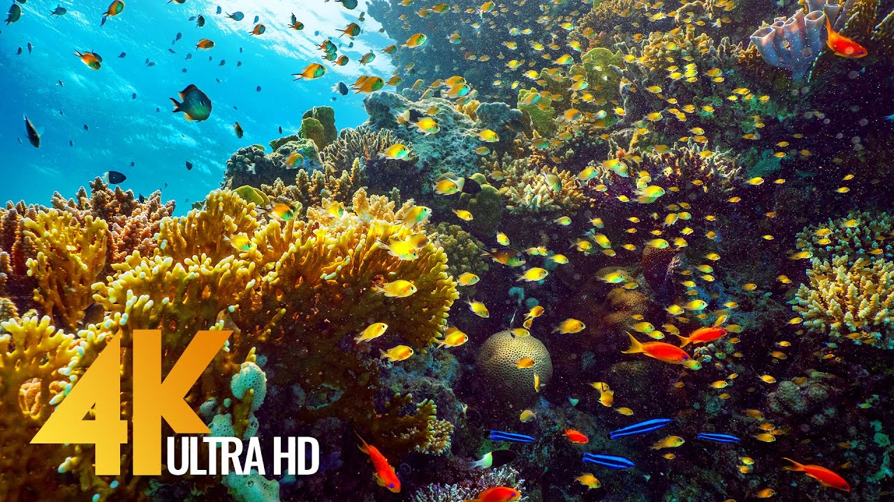 Coral Reef World